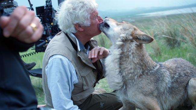 Wolf-Le-Dernier-Loup-Jean-Jacques-Annaud-Image-17